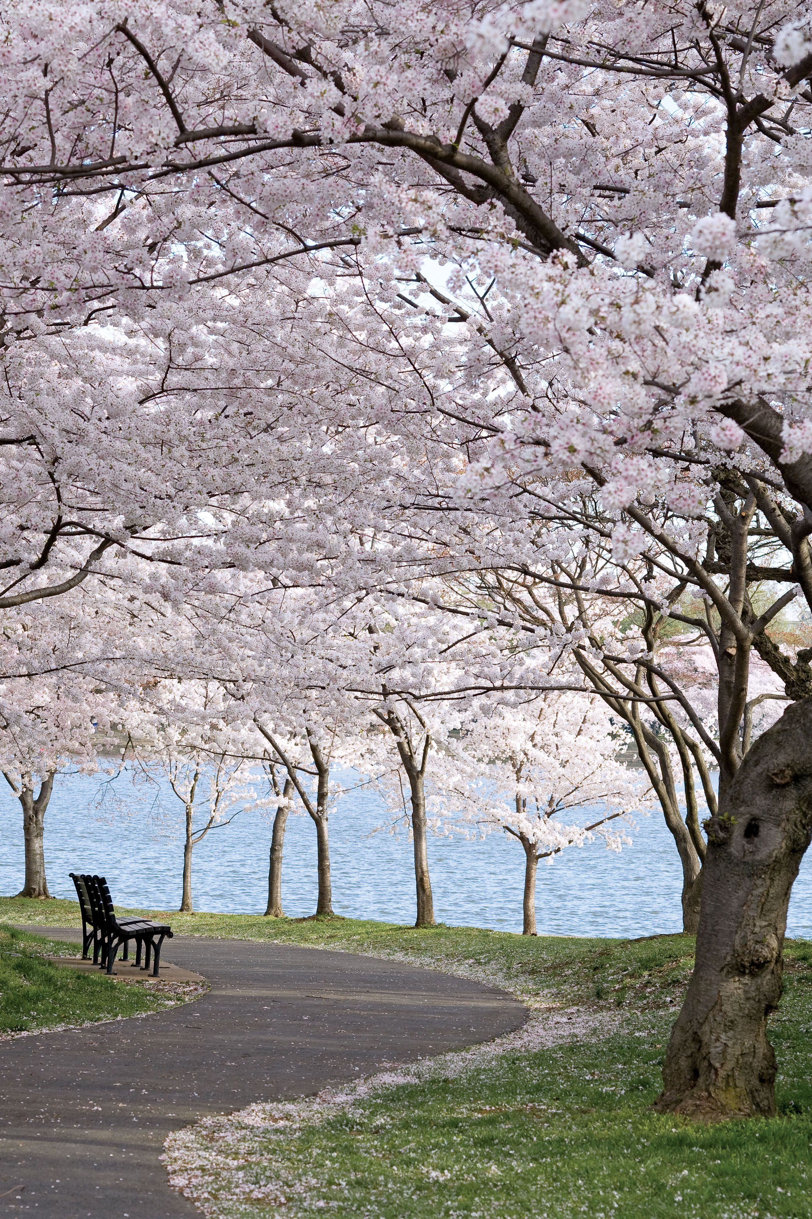 Four Favorite Springtime Destinations Victoria Magazine In 2021 Nature Tree Cherry Tree Tree