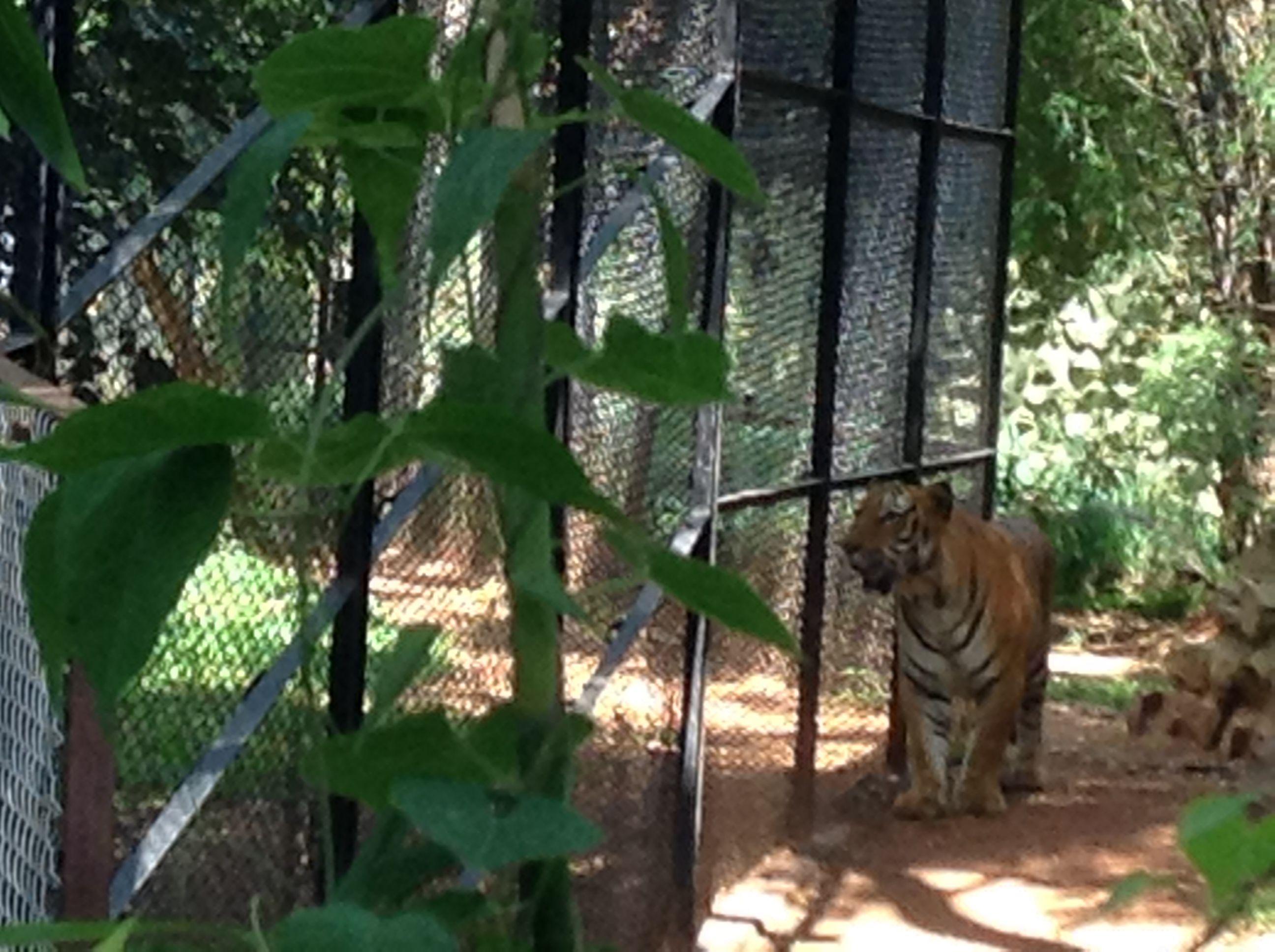 12b48866dfc1526154907b1864eaae8e - Mysore Zoo Sri Chamarajendra Zoological Gardens