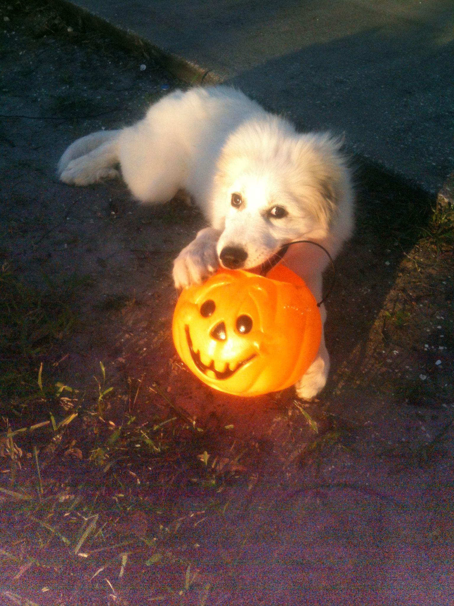 Suzy loving the Halloween weather Farm animals, Animals