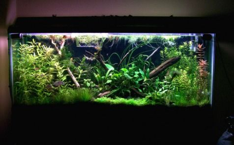 Show Me Your 55 Gallon Planted Tank Page 2 Amazing Aquariums Nature Aquarium Fish Tank