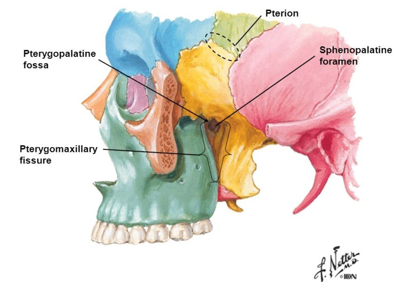Pterygopalatine Fossa | Head & Neck Anatomy | Pinterest