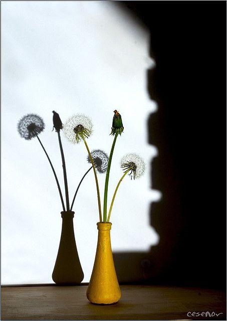 Blumen Stillleben . Vasilij Cesenov