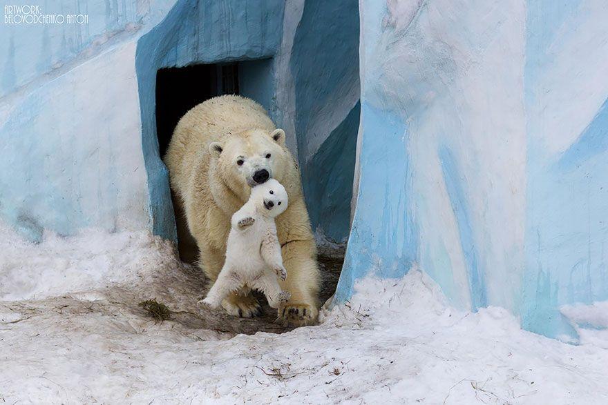 e9cc8083b1b Big Bears Teaching Their Teddies How to Bear  BoredPanda SOOOOOOO cute!  There s a reason