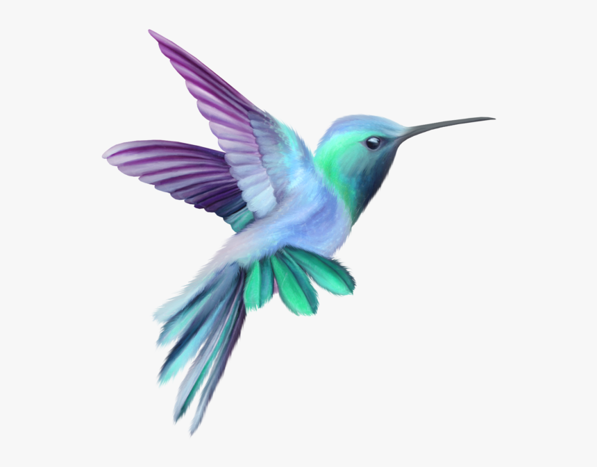 Orchid Drawing Hummingbird Pink And Purple Hummingbird Hd Png Download Is Free Transparent Png Image To Orchid Drawing Hummingbird Pictures Hummingbird Art