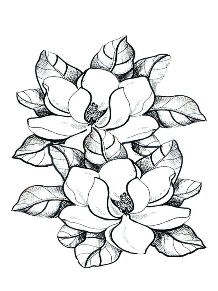Magnolia Coloring Pages Best Coloring Pages For Kids In 2021 Flower Coloring Pages Flower Drawing Coloring Pages For Grown Ups