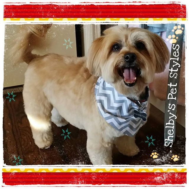 Shelby S Pet Styles Llc Shelbyspetstyles Instagram Photos And Videos With Images Pet Style Online Pet Boutique Pets