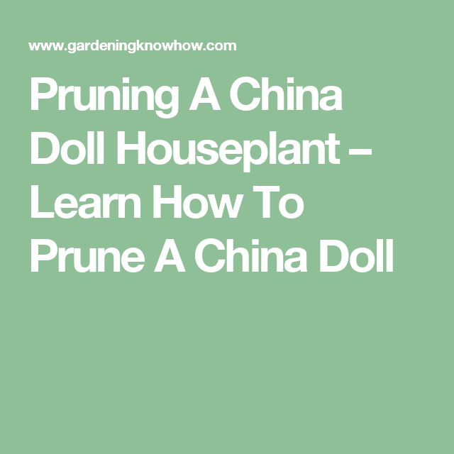 Pruning A China Doll Houseplant Learn How To Prune A China Doll China Dolls China Doll Plant Prune