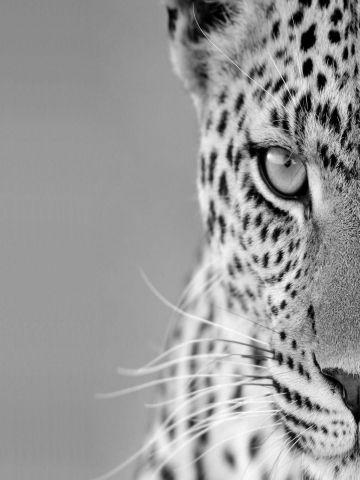 Black and White Cheetah Wallpaper