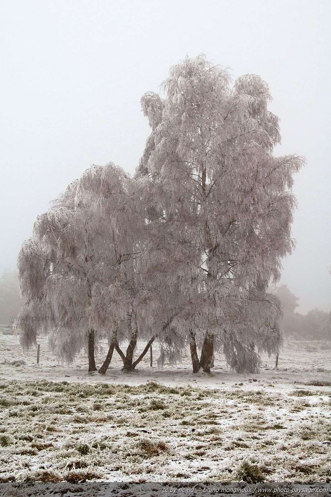 Trees covered with frost in winter. Picture shot in middle France mountains (Massif Central).