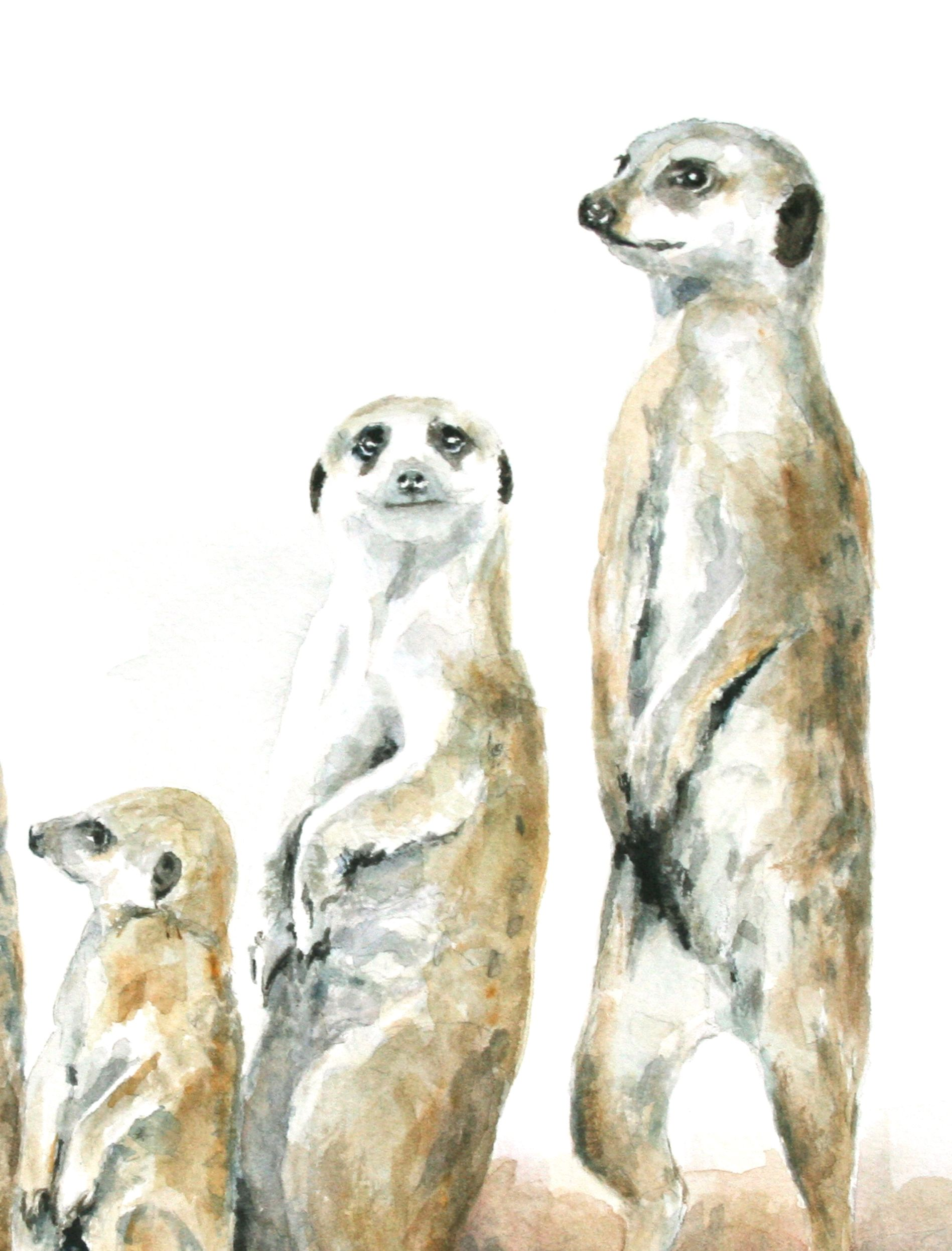 Picture of Meerkat Family Large Print NEW Photo Choiose Fine Art Poster Canvas