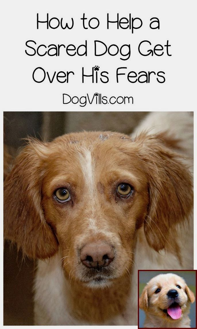 How to train dog for service dog certification. Tip ...