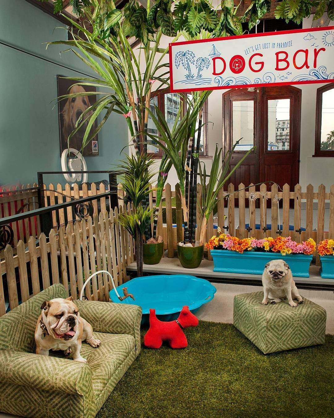 The Largest Dog Hotel In The World Is Everything Your Dog