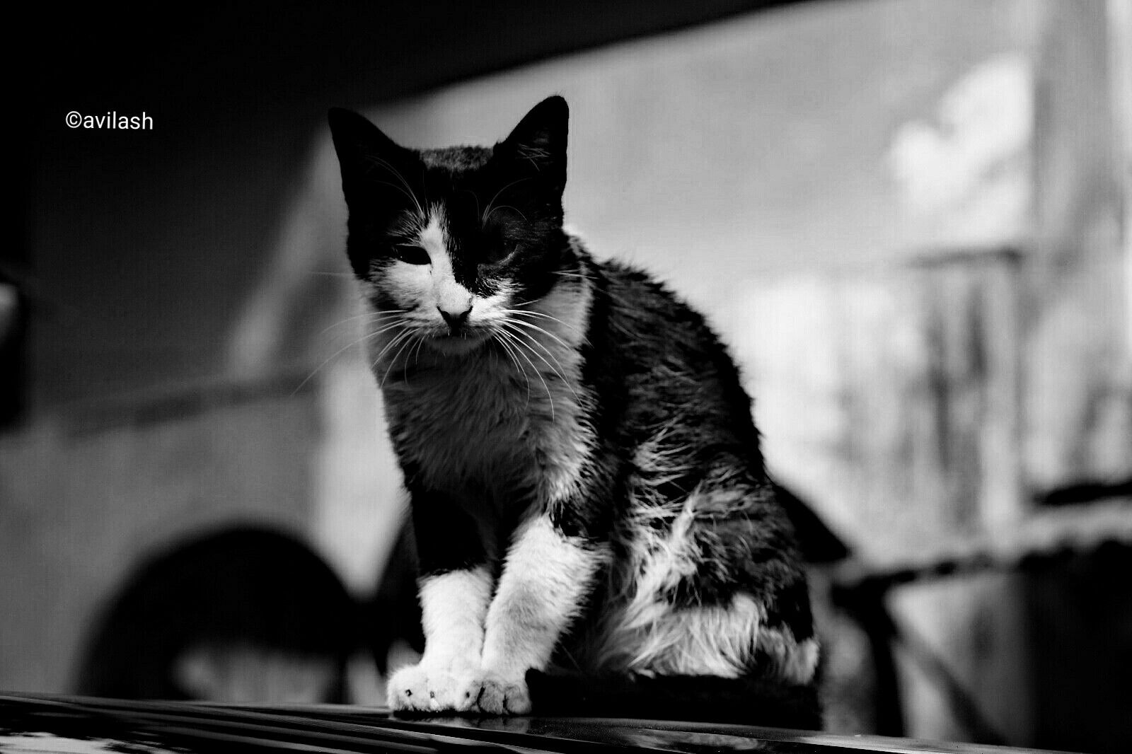 object : black cat camera : 1200D lens : 18-55mm edit : black and white