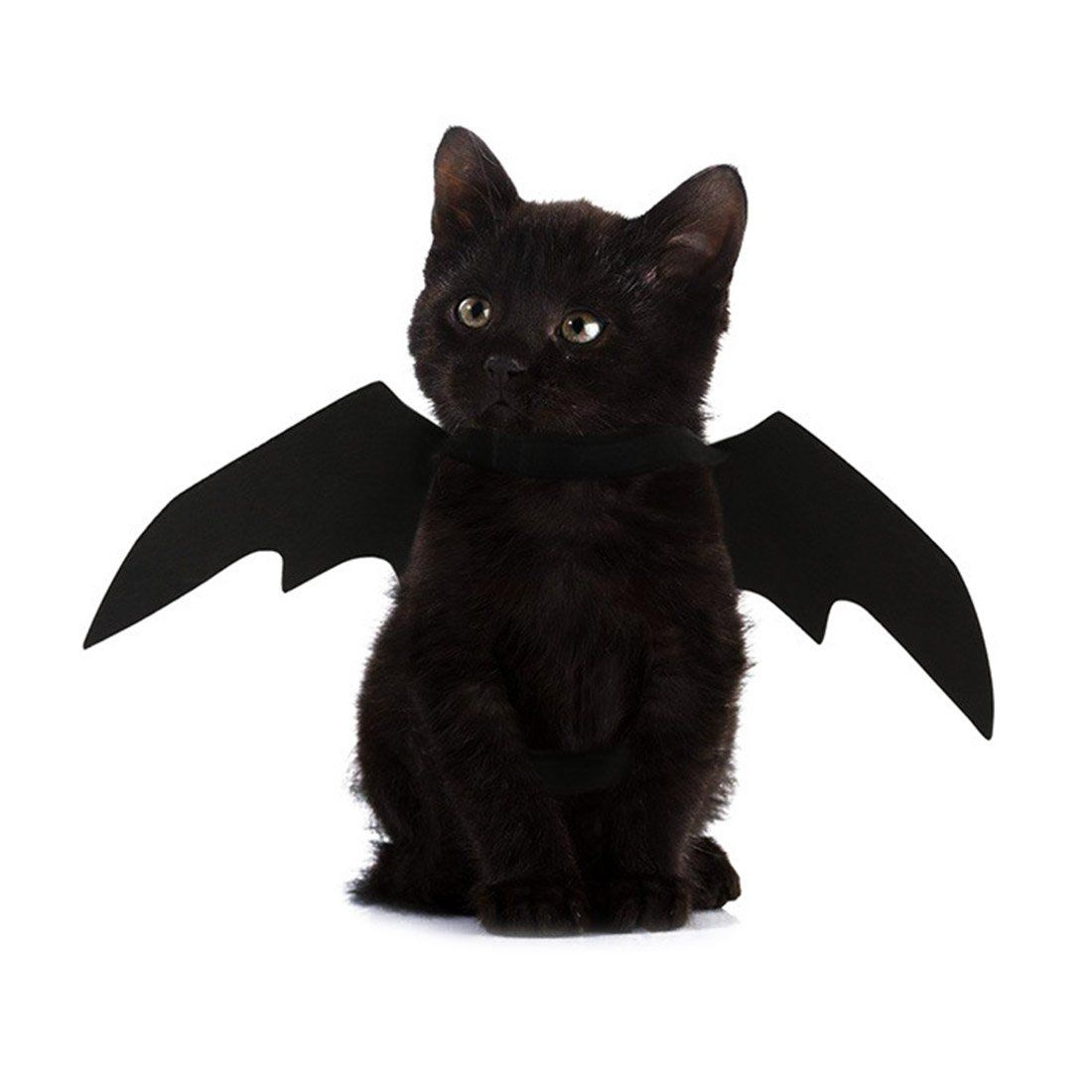 Easy Batwings Cat Halloween Costume Pet Halloween Costumes Cat Halloween Costume Halloween Animals