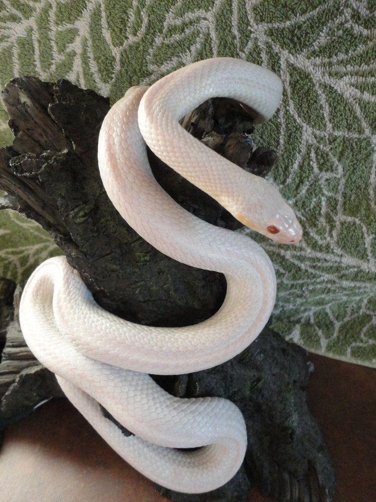 Blizzard Cornsnake By Coldblooded87 D54zrql Jpg 774 1032 美しいヘビ ヘビ 蛇 神様