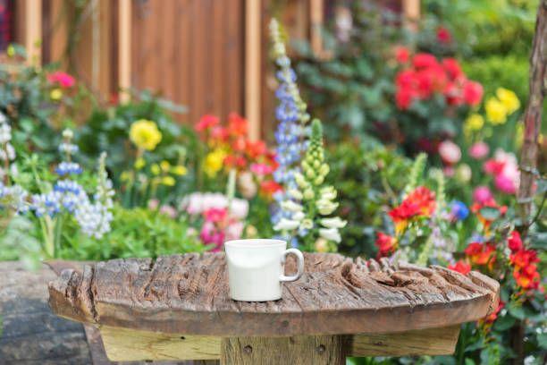 coffee cup in backyard garden