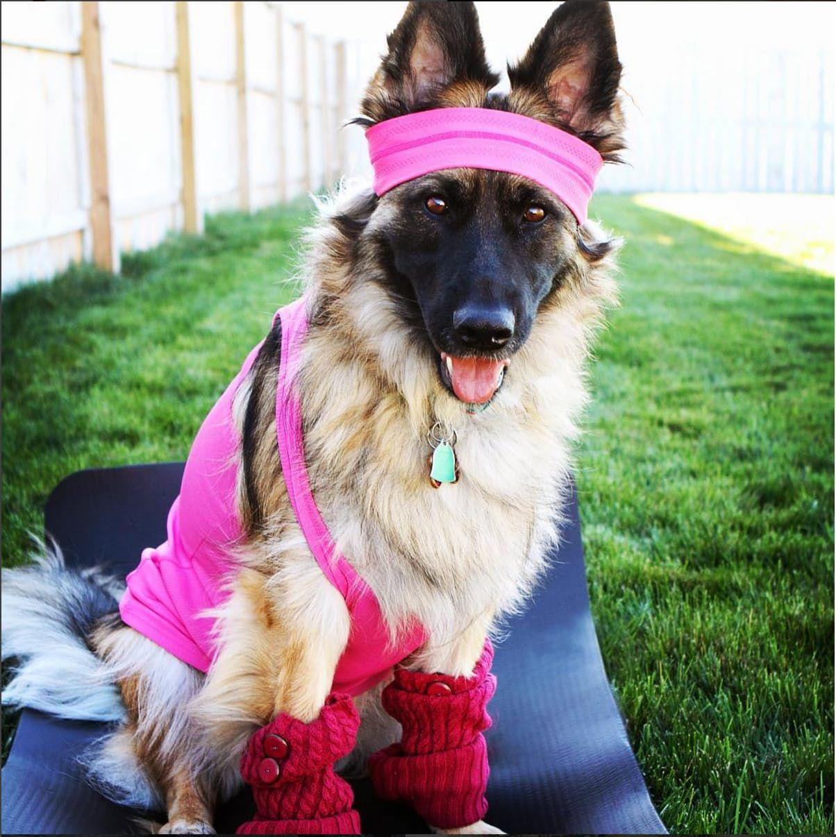 Amazing Dog Cat Halloween Costumes From Instagram Dog