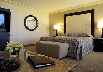 Rio All Suite Hotel Casino Las Vegas Pet Friendly Hotel Hotels Room Hotel Casino Las Vegas