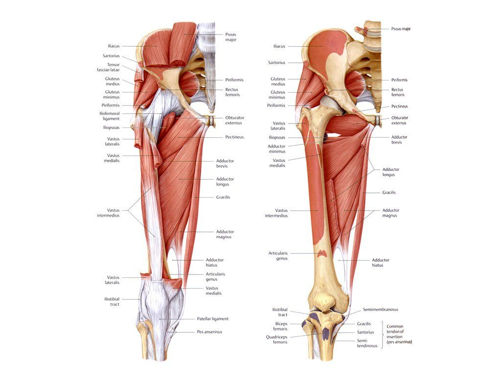 Anterior Hip Muscles Cl.icking Hips Pain   DIY body fixes   Pinterest