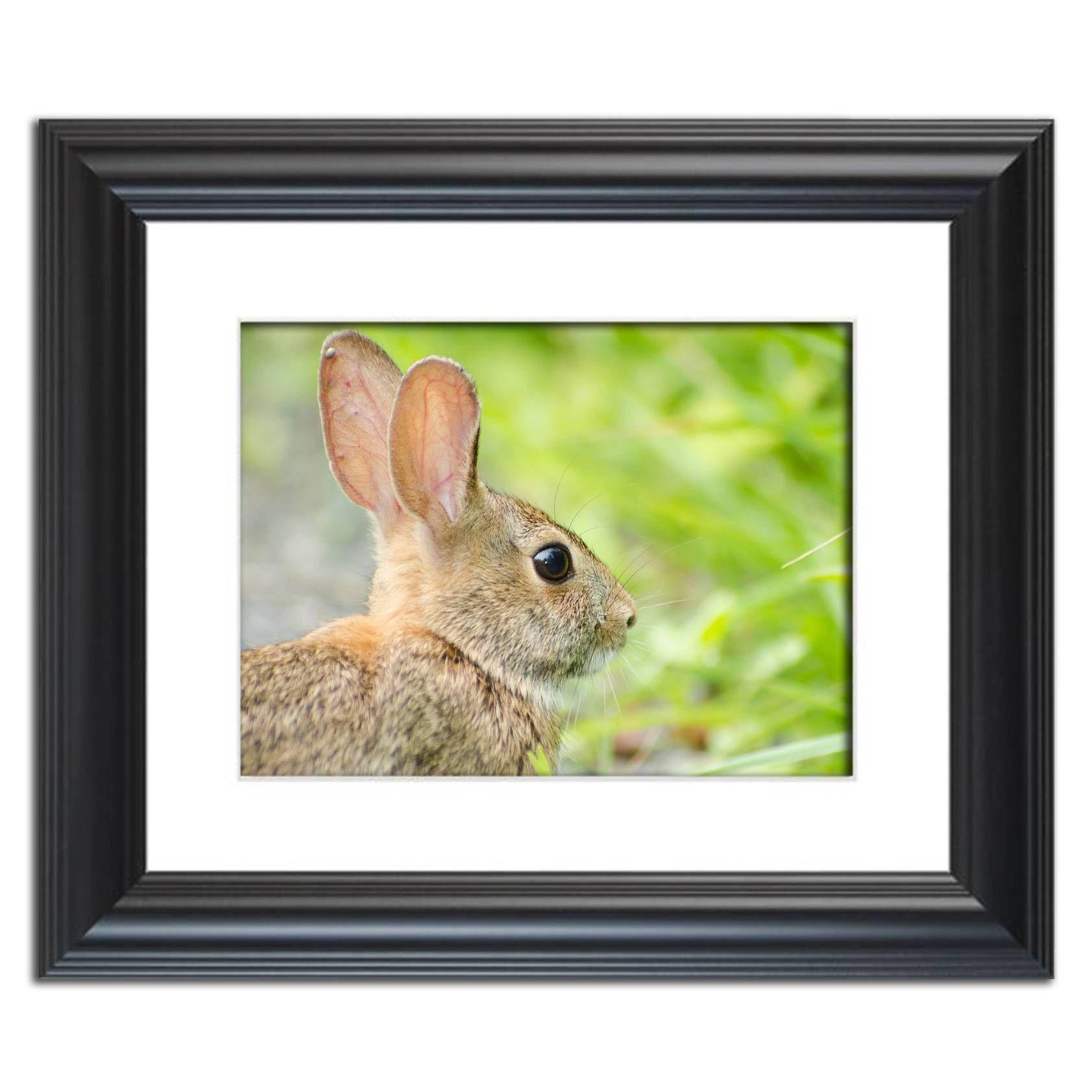 Bunny at Bombay Hook Animal / Wildlife Photograph Fine Art