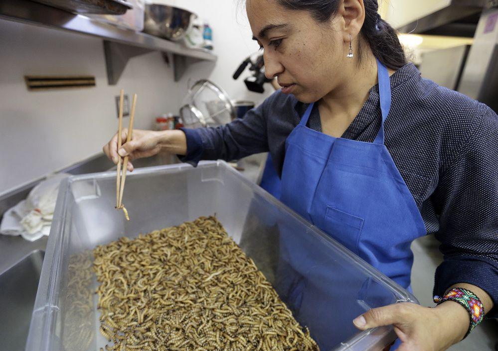'Entopreneurs' feed world's growing appetite for bugs