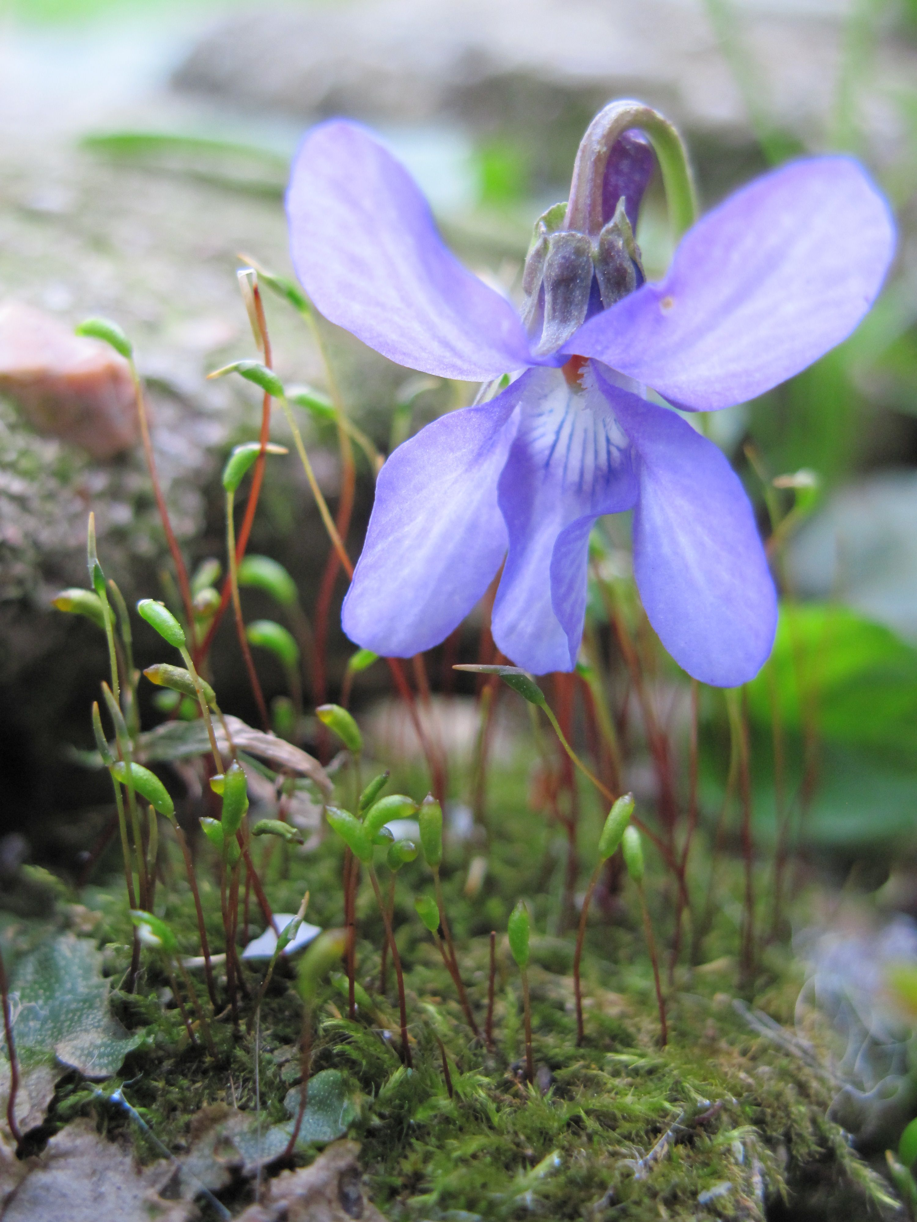 a little magic world in my garden. violet, garden,fairy