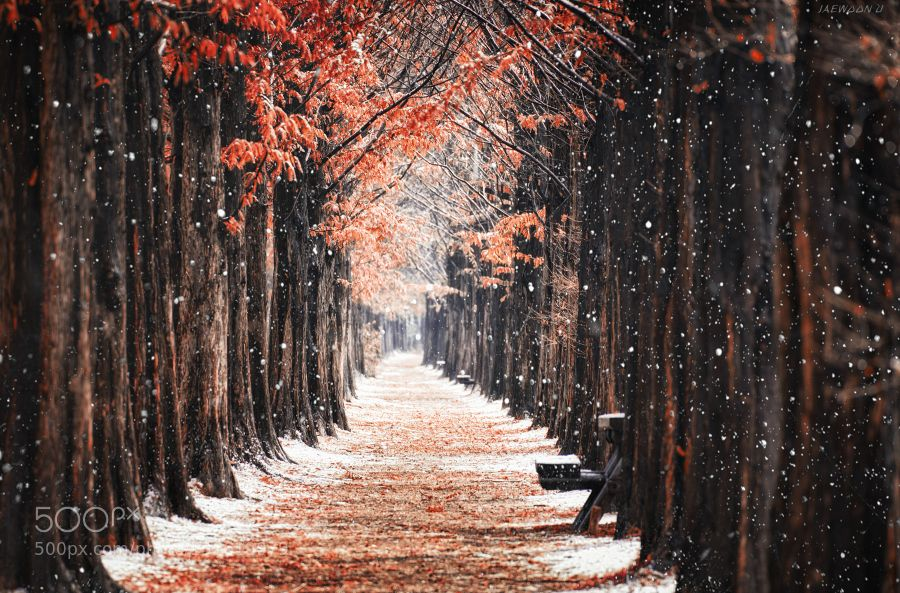 First Snow - Pinned by Mak Khalaf 하늘공원 메타세콰이어길의 첫 눈 Between Autumn and Winter...... Landscapes coldfalljaewoon ukoreaseoulsnowsouth koreatreeswhitewinter by Dyne999