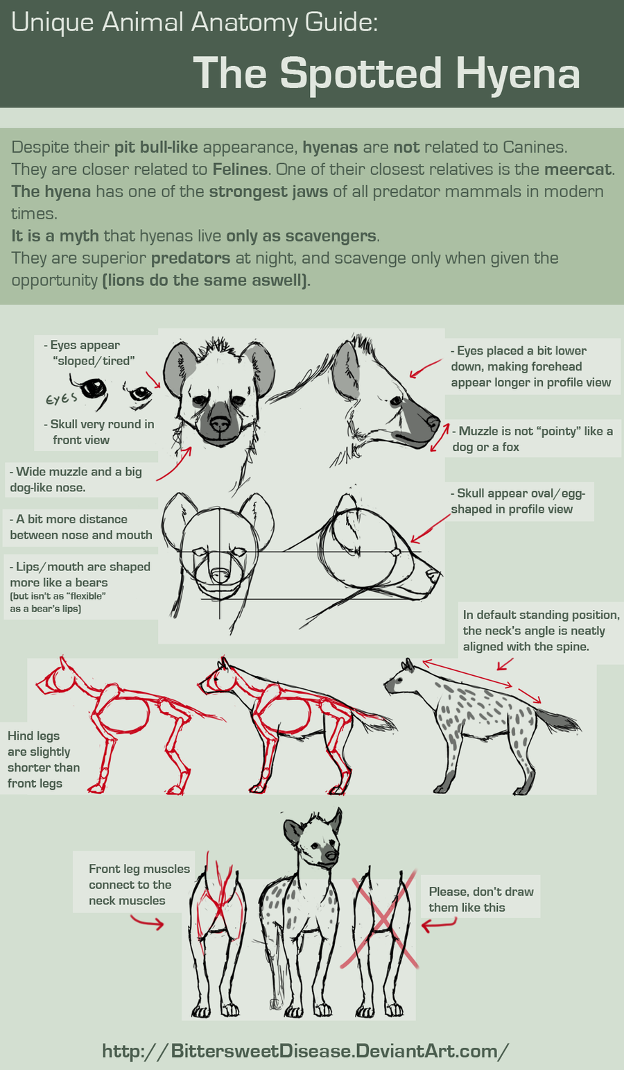 foervraengd unique animal anatomy spotted hyena by bittersweetdisease oh lol i was supposed to just make a boss design ended up with a guide