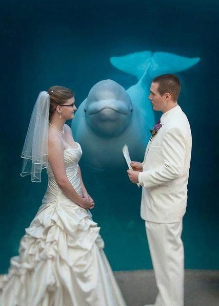 Officiated by whales :)