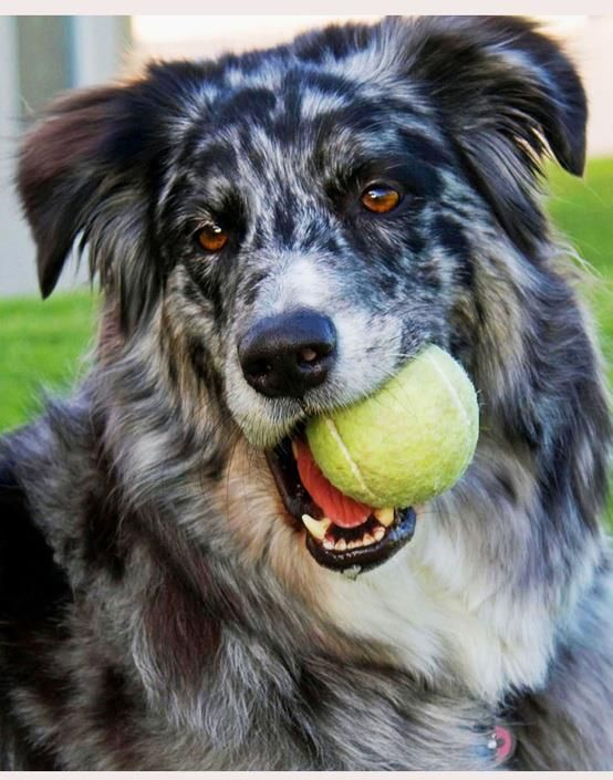 dont let your pups play alone, bring them to doggie day care to have some fun!