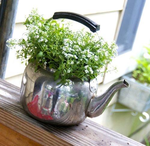 She Shoots Sheep Shots With Many Thanks To Tthe Internets Porch Plants Tea Pots Teacup Gardens