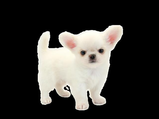 ペットの専門店コジマ ペット ペットショップ 子犬