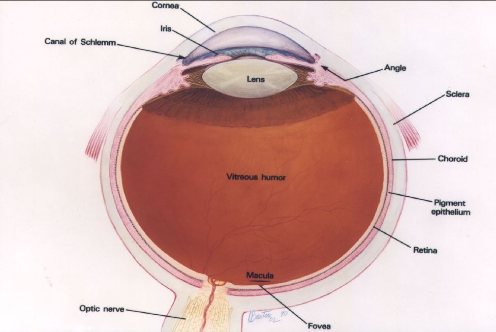Drawing of the eye diagram eye diagram with labels please credit national eye institute national institutes of health ccuart Images