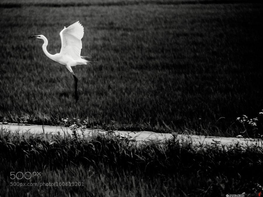 Bird by JANGJEON via http://ift.tt/295QXbo