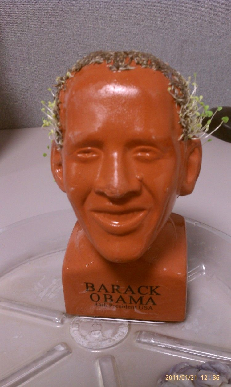 Hehehe Obama Chia Pet Still In Growth Funny Scale 4 Out Of 10 What Do You Think Chia Pet Obama Chia Pet Handmade Decorations