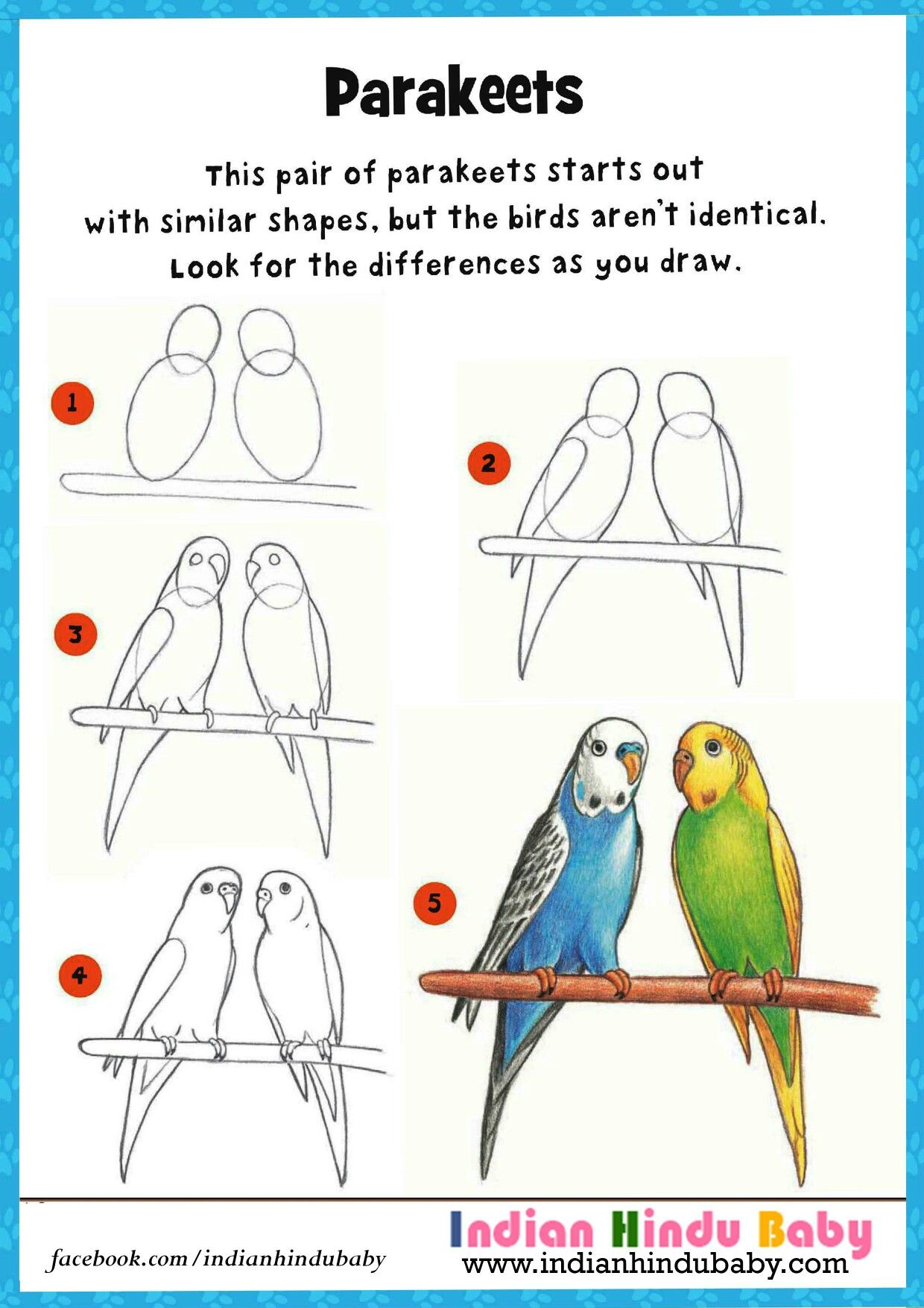 Teach your kid to draw and paint parakeets with our simple drawing tips love birds drawing