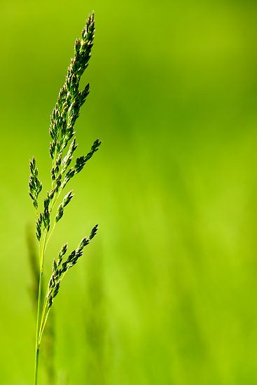 The Green Green Grass Of Home by withacanon