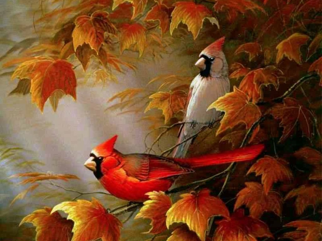 Fall Screensavers  The Free Autumn Cardinals Wallpaper