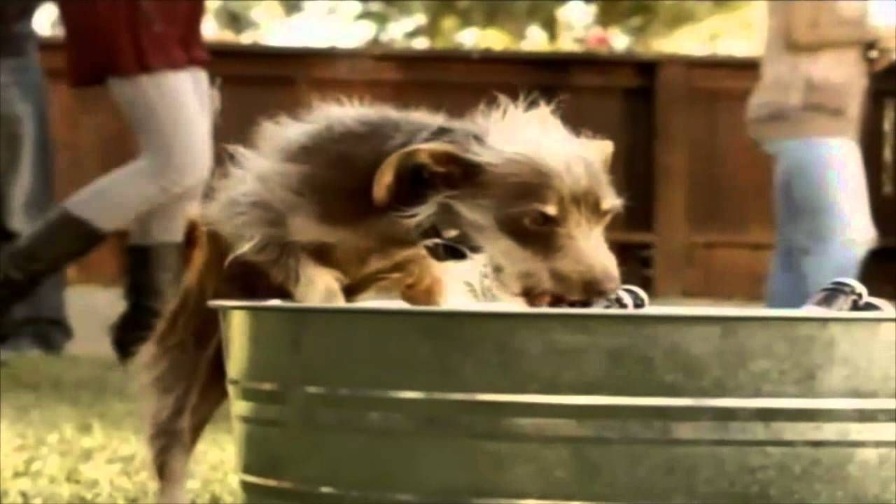 Bud light beer chasing dog commercial amazing creatures bud light beer chasing dog commercial aloadofball Images