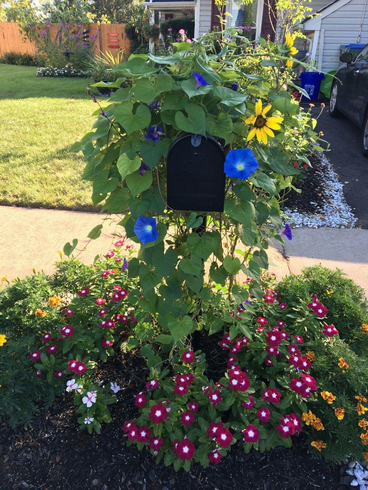 Mailbox Flowers Morning Glory Sunflowers Vinca And Marigolds Mailbox Flowers Flower Garden Flowers