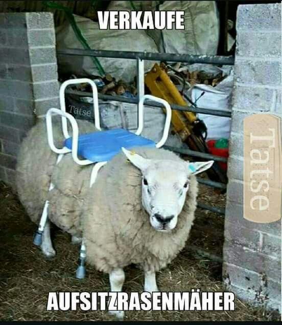 Bilder … | witzig | Pinterest | So true and Humor