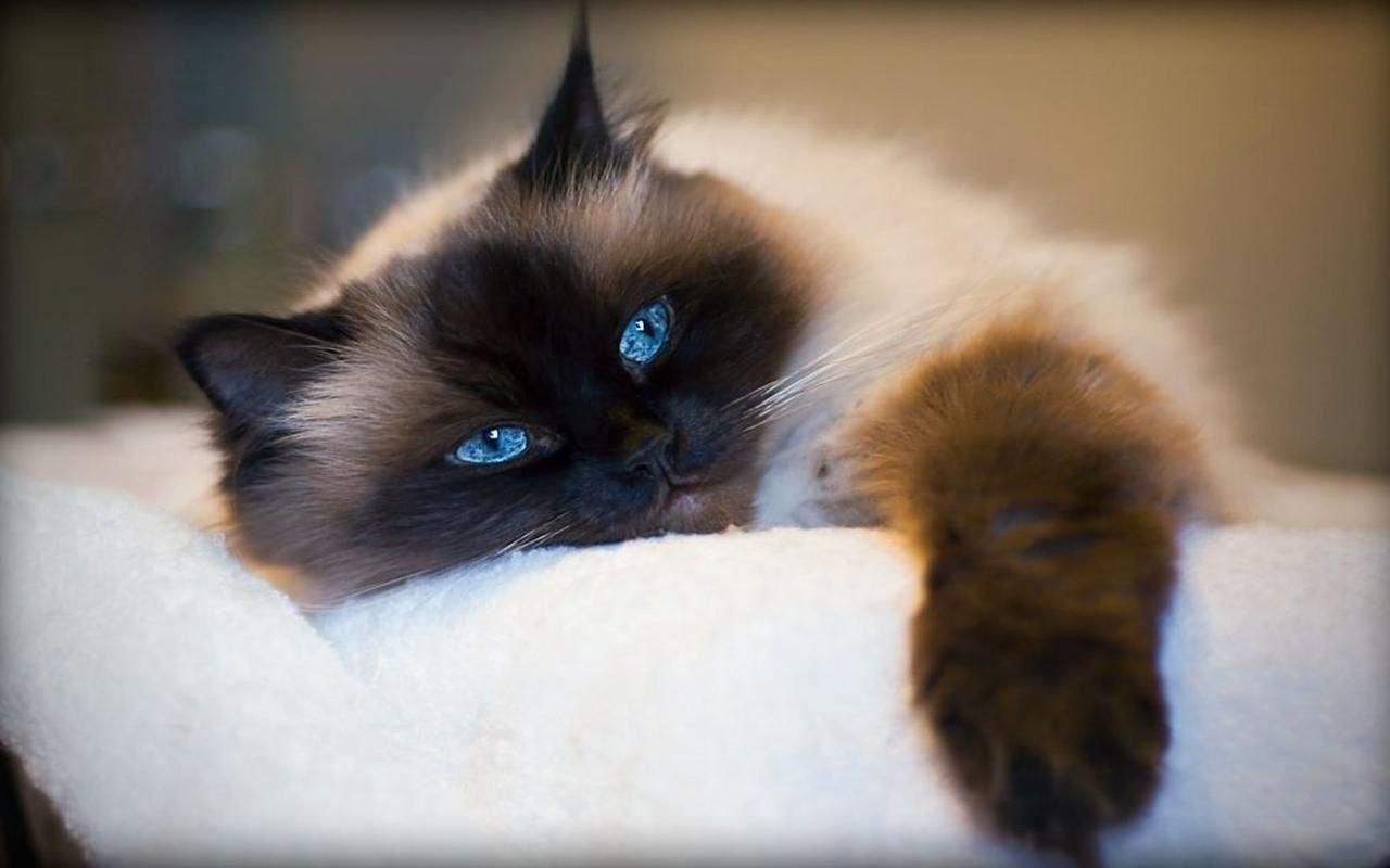 Kittyy~