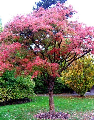 12c4e16df9ed0ac5564efc39f4753311 - Top Ten Trees For Small Gardens