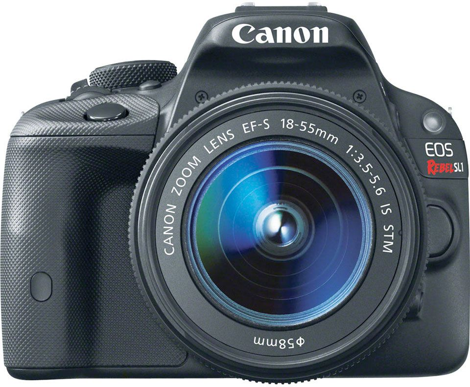 7 Recommended Entry-Level DSLR Cameras | Nikon, Canon y Sony