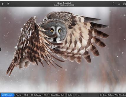 Fotopedia - Visual Guide App (Free) https://itunes.apple.com/us/app/fotopedia-wild-friends/id468628356?mt=8&ign-mpt=uo%3D4