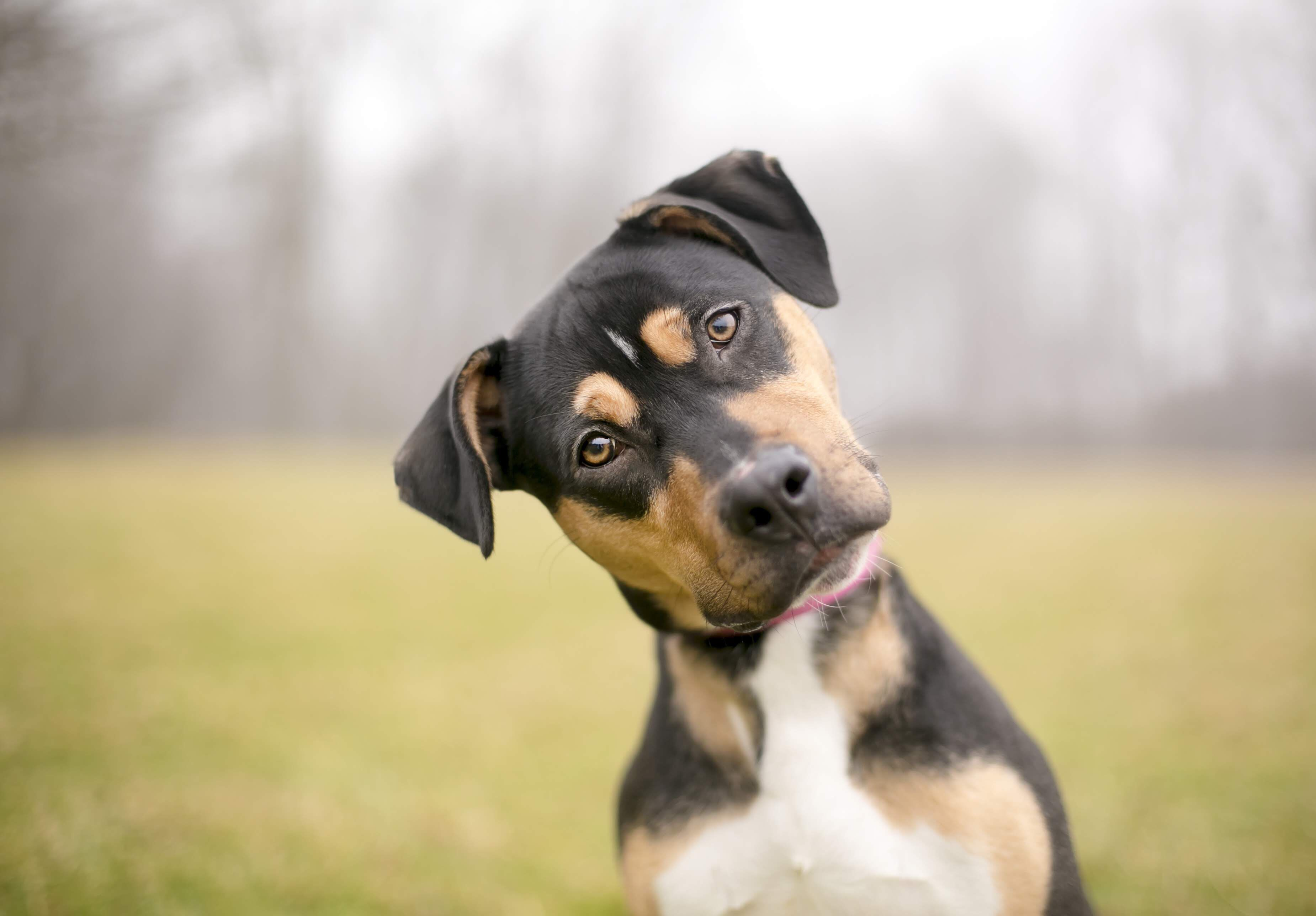 Mixed Breed Dog Looking Confused Funny Dogs Curious