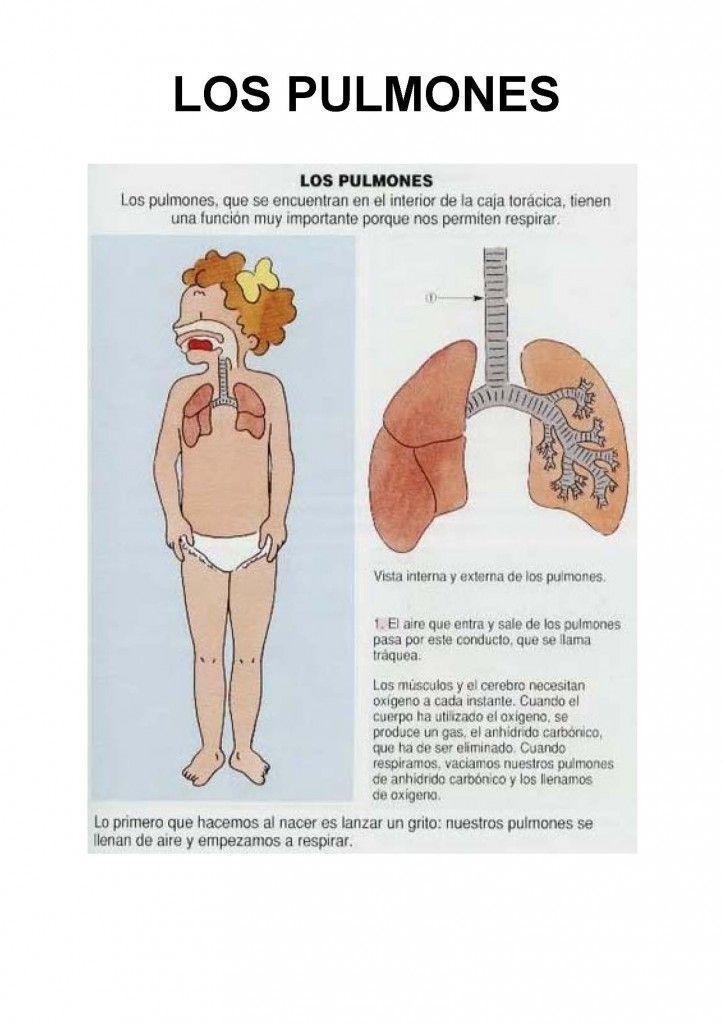 LIBRO-EL-CUERPO_05 | CUERPO HUMANO en 2018 | Pinterest | El cuerpo ...
