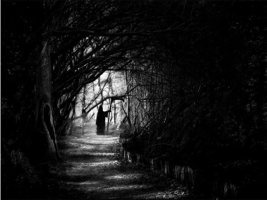 Dark Forest Night Dark Forest Night Image 31000 Jpg