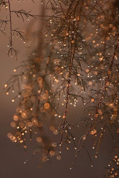 Through the dark and fog on this cold night, I see glitter hanging from the wet, barren tree branches and my heart is lifted; warm with joy.