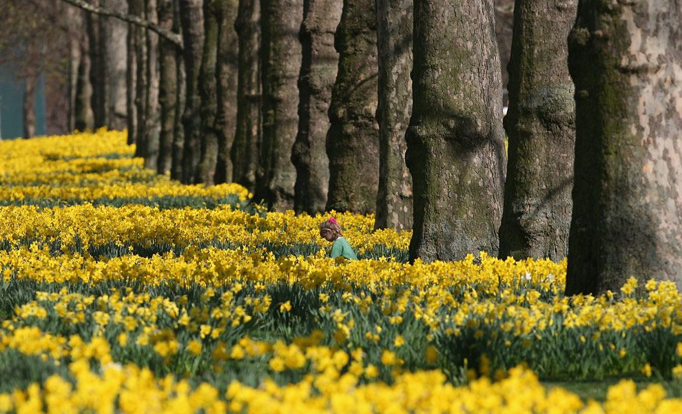 Signs of spring spring daffodils and flowers mightylinksfo